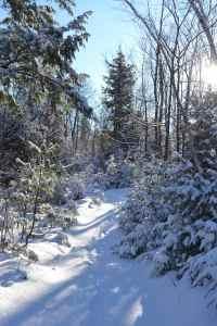 little-young-deer-trail-2.jpg