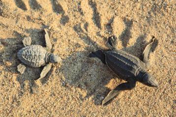 PV Turtles