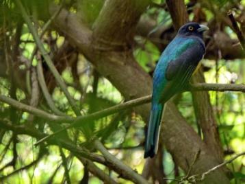 pv blue bird