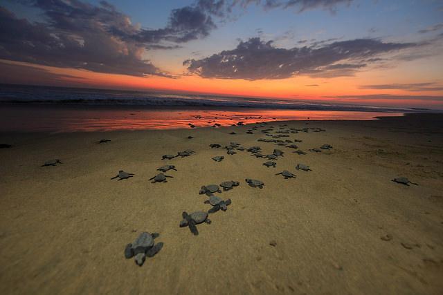 pv turtle sunset