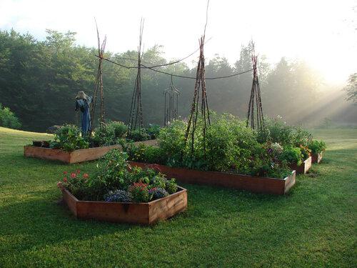 dragonfly+yoga+garden.jpg